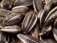 Хранение, очистка и сушка семян подсолнечника