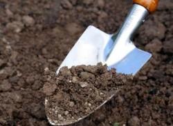 Использование червей для улучшения почвы