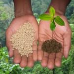 Роль калия в жизни растений
