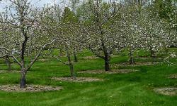 Удобрение фруктового сада