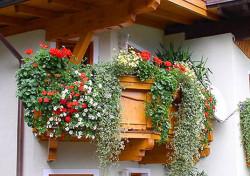 Выбор растений для выращивания на балконе