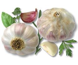 Выращивание и польза чеснока