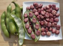 Как вырастить бобы