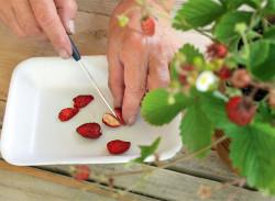 Как выращивать клубнику из семян