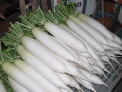 Редька дайкон — японский овощ