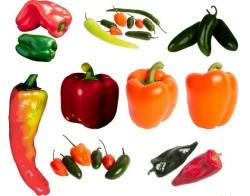 Технология выращивания перца