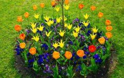 Классификация цветов по условиям выращивания