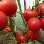 Поговорим о выращивании помидоров...