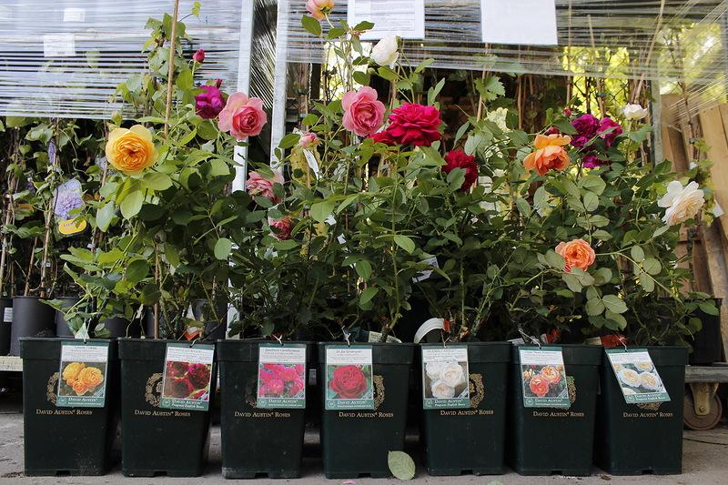 Цены на посадку растений