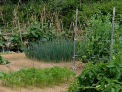 Агротехнические способы и методы защиты растений