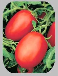 Безрассадный метод выращивания томата