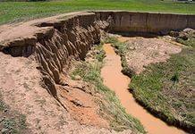 Биологическая активность почвы