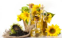 Ботаническое описание и биологические особенности подсолнуха