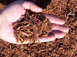 Как мульчировать почву