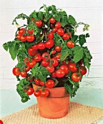 Какой размер горшка подходит для выращивания римских помидоров