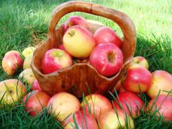 Каждый год с яблоками