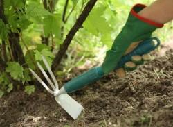 Обработка почвы в саду