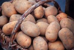 Основы успешного хранения картофеля