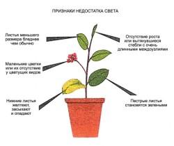 Освещение, необходимое комнатным растениям