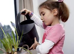 Полив и опрыскивание цветов и комнатных растений