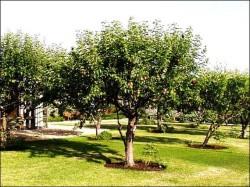 Посадка фруктовых и плодовых деревьев