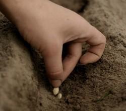Посев семян в сухую почву