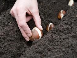 Повторные и уплотненные посевы