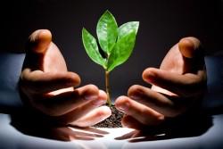 Практика защиты растений