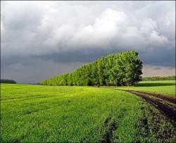 Применение защитных лесополос в сельском хозяйстве