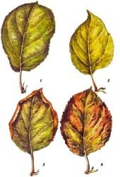 Признаки недостатка питательных веществ у растений