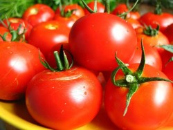 Размер томатов сорта Бархатные