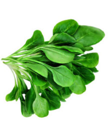Шпинат - агротехника, размножение и полезные свойства
