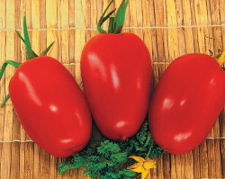 Сорта томатов для средней полосы