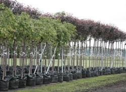 Советы по посадке саженцев фруктовых деревьев