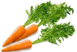 Технология выращивания и хранения моркови