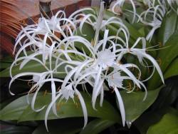 Уход за цветами и растениями в период покоя