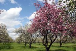 Весення защита фруктового сада