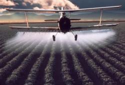 Влияние пестицидов на растения и экология