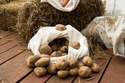 Болезни картофеля в погребе
