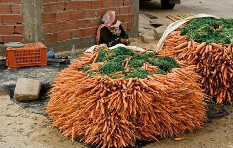 Как правильно сажать морковь 94