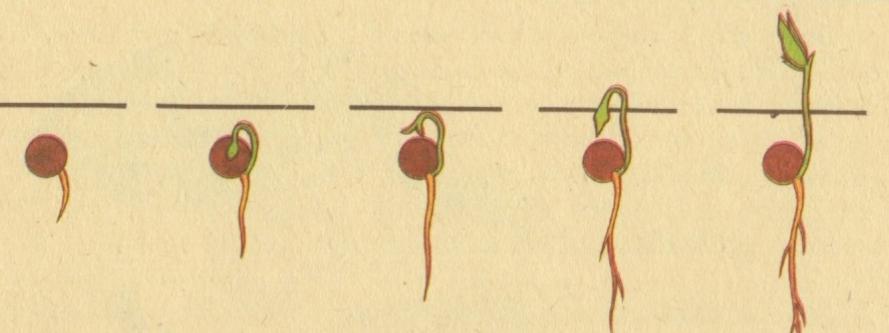 Как прорастить семена в домашних условиях видео