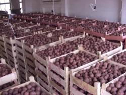 Хранение овощей и картофеля