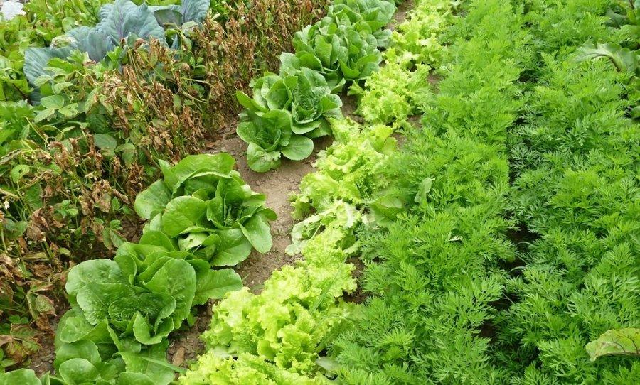 Салат из всего что есть в огороде на зиму