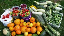 Когда собирать урожай овощей
