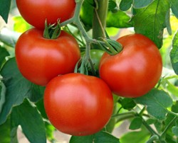 Нужные, умные штучки при выращивании томатов