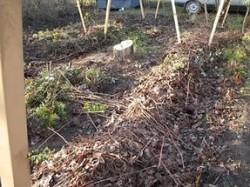 Подготовка виноградных кустов к зиме