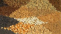 Посевные качества семян
