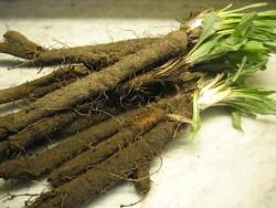 Скорцонера или черная морковь