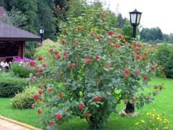Уход за ягодными кустарниками осенью
