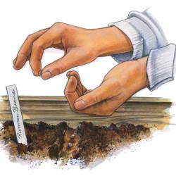 Выбор места и почвы под редьку